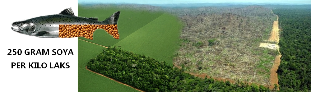 Som med palmeolje belaster også soyadyrking regnskogen.